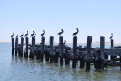 birds_0490