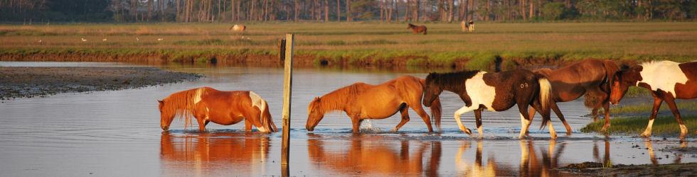ponies-9