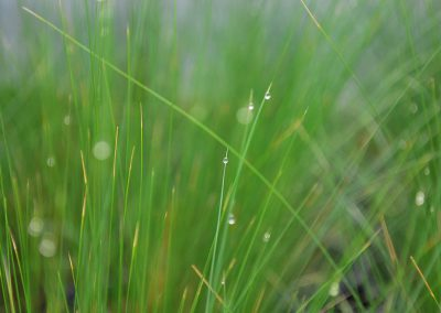 specialty-grass